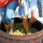 Four Sisters Winery - Grape Stomping