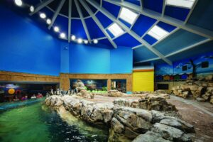 image of Turtle Back Zoo penguins