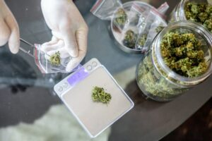 Marijuana buds being handled by a latex-gloved hand and being weighed on an electronic scale.